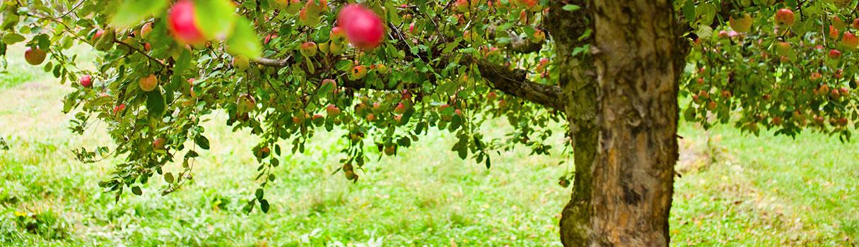 orchard_advisors_banner4-sm